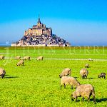 Mont-Saint-Michel-France-Normandy-Morning-Sheep-Pasture