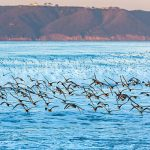 Coronado-Island-Ocean-Birds-Point Loma-Cabrillo