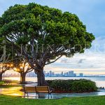 San Diego-Skyline-Bay-Harbor-Tree-Park