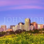 San Diego-Skyline-Sunrise-Morning-Balboa-Park-Flowers
